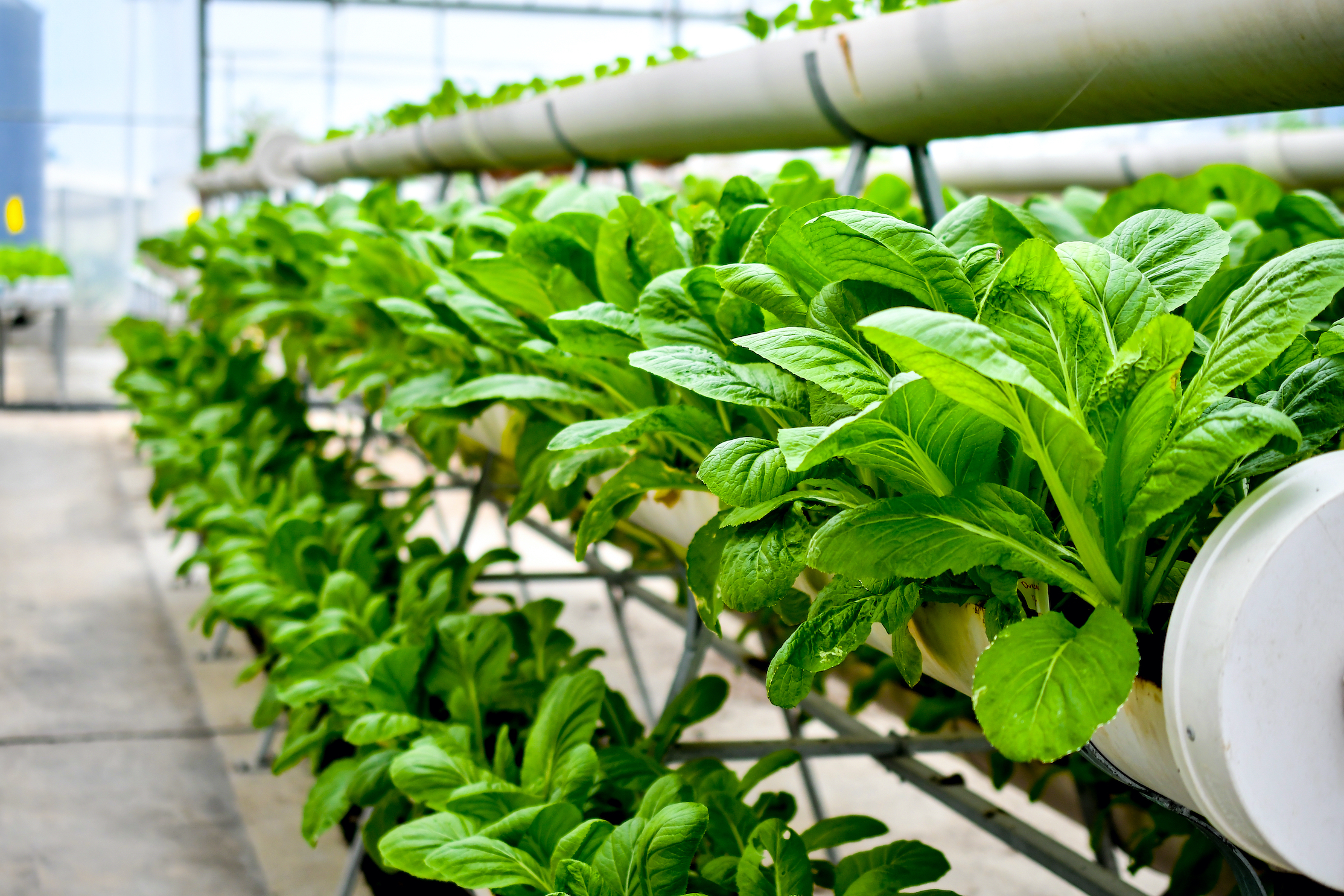 The decarbonization promise of indoor agriculture is still in the seed stage