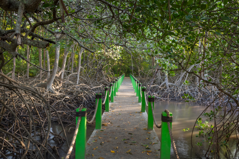 Scenic path on mangrove forest at Bama Beach in the Baluran National Park, a forest preservation area on the north coast of East Java, Indonesia.