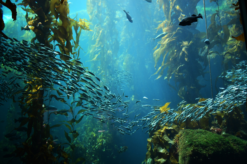 Can the forests of the world's oceans contribute to alleviating the climate  crisis? | Greenbiz