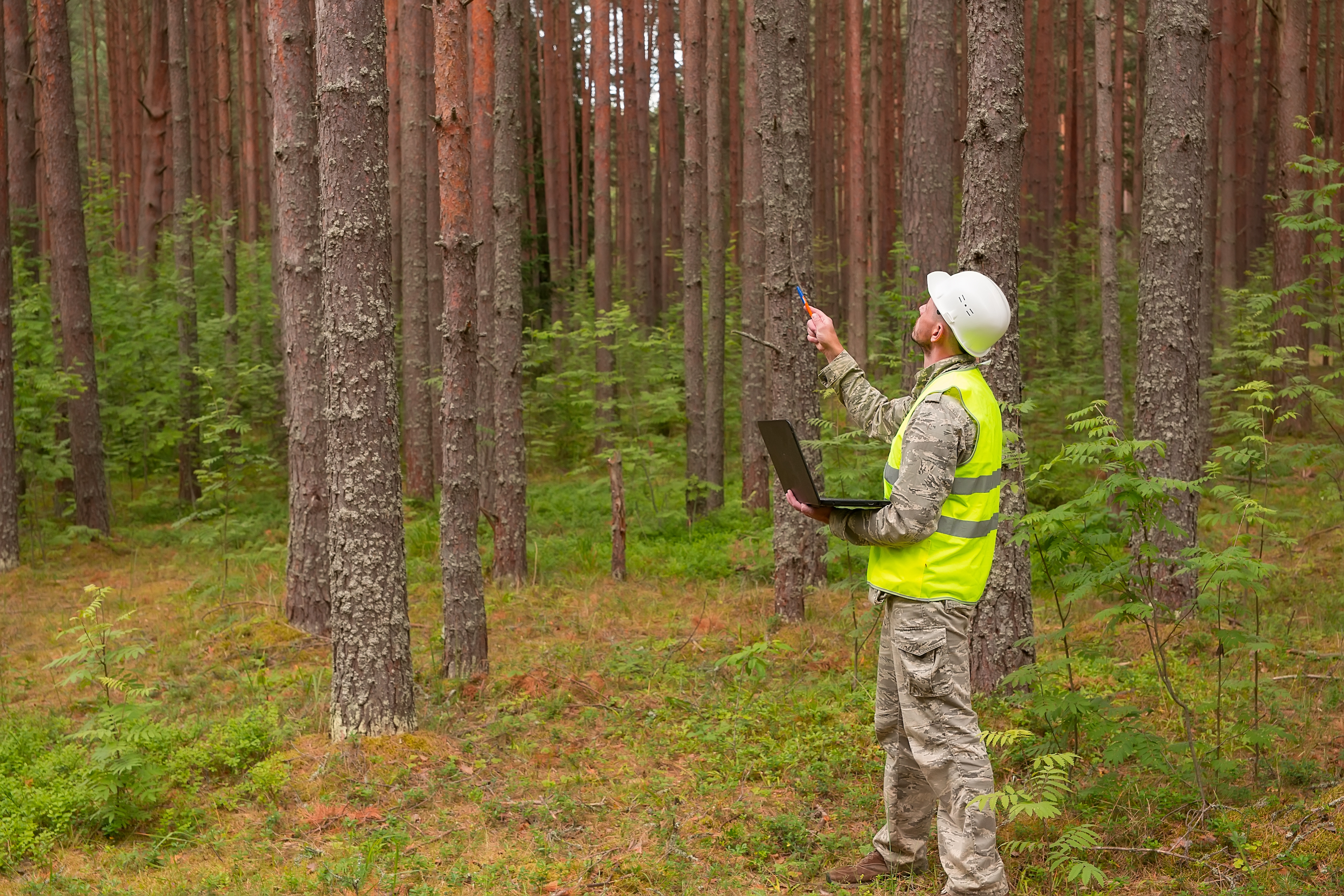 Tree monitoring in forest