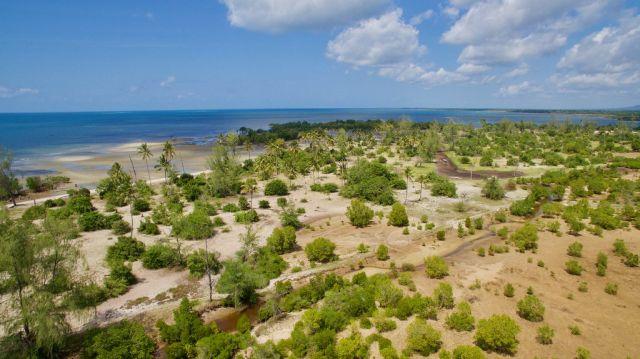 mangrove-restoration-area