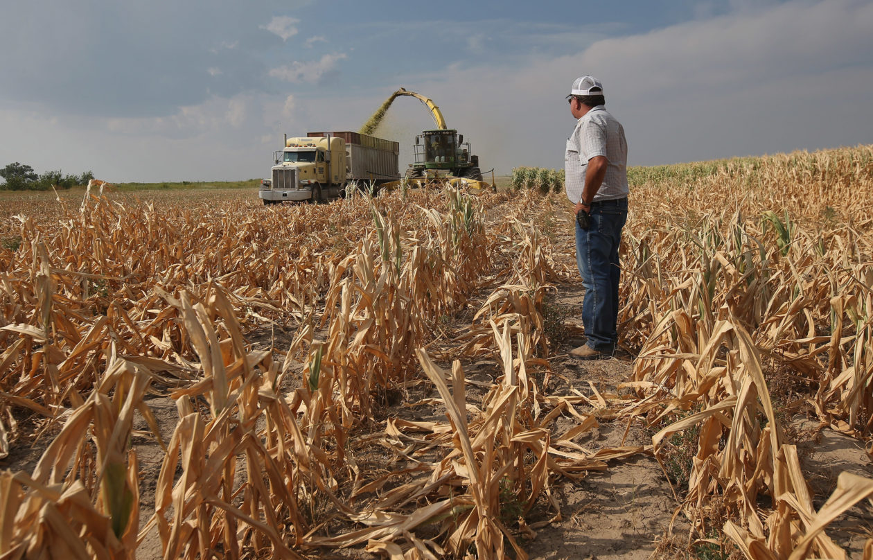 corn and farmer