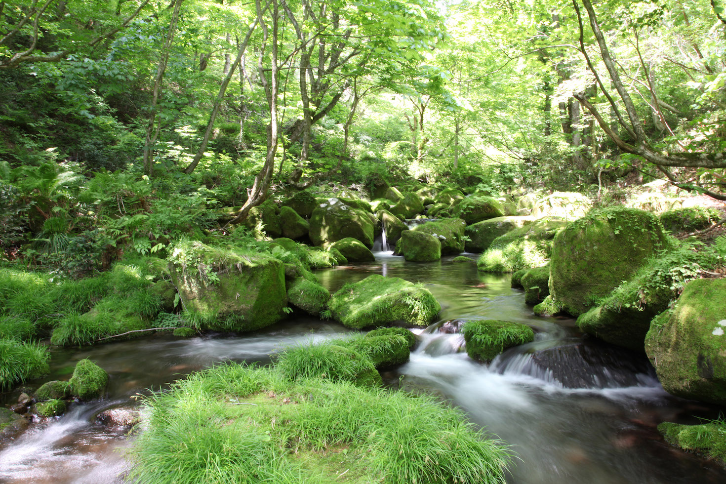 Forest with river