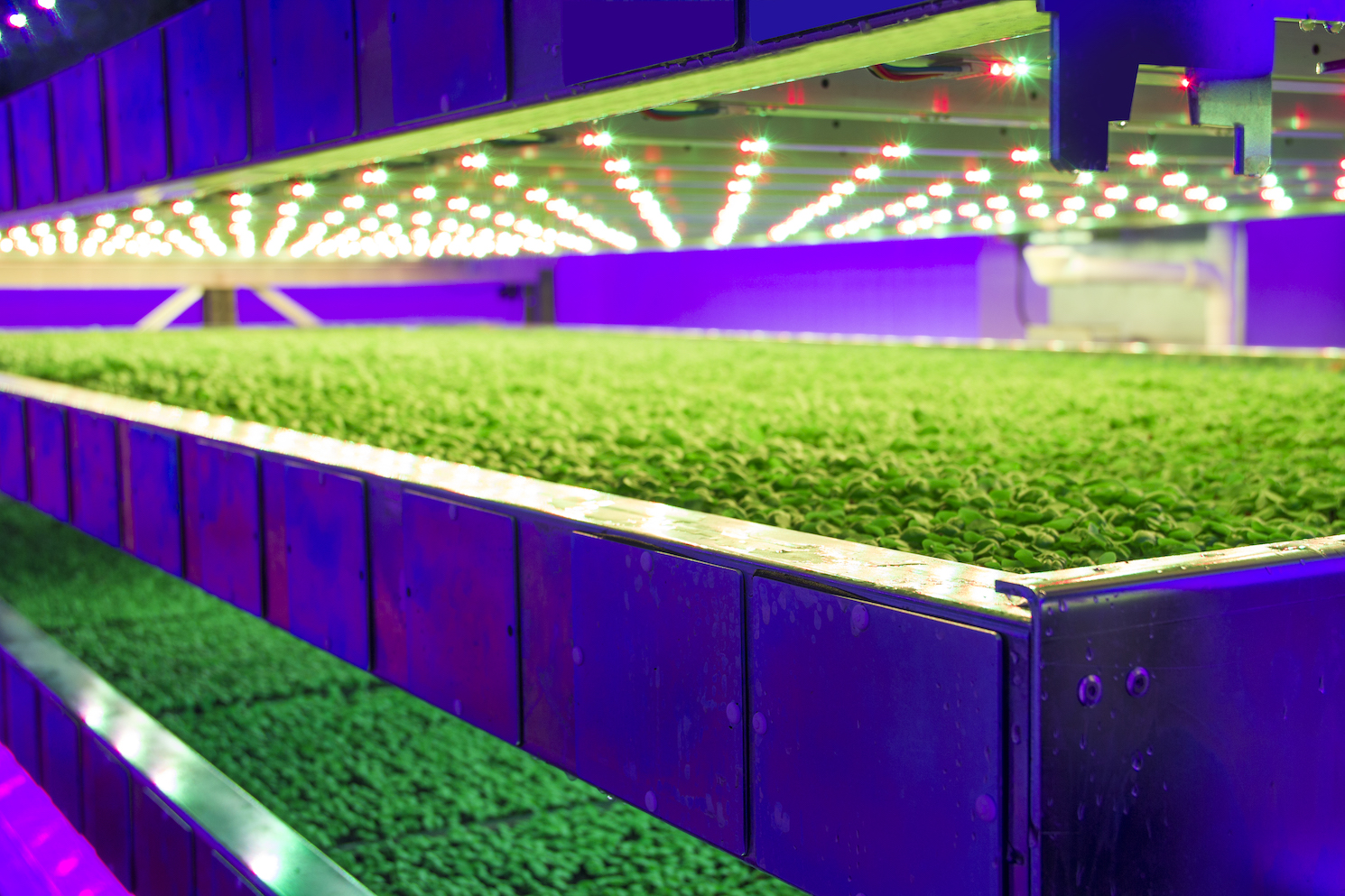 Greens in trays