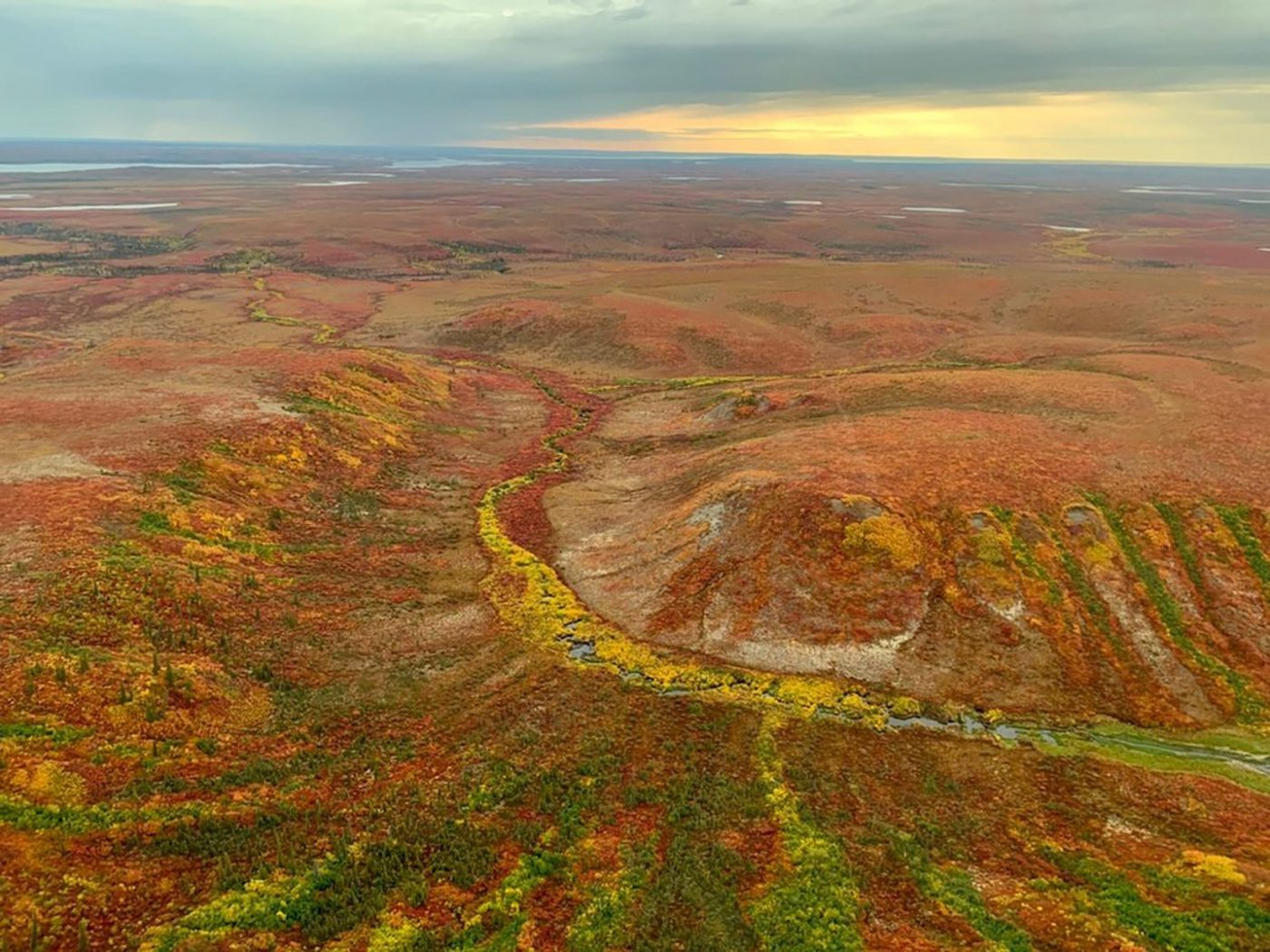 Why saving peatlands can help stabilize the climate