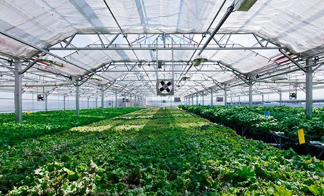 Gotham Greens greenhouse
