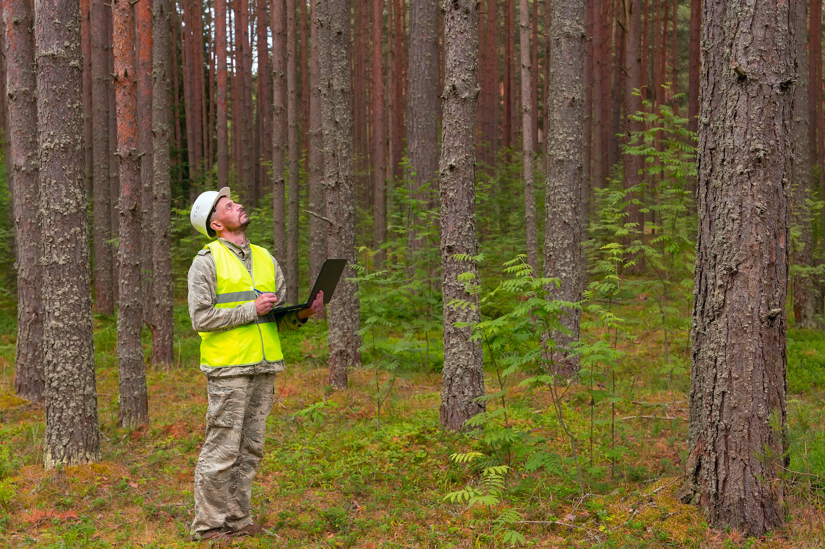 Forest engineer in a working forest