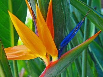 Bird of paradise photo by D. Laird via Flickr