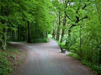 Forest road image by Diana Taliun