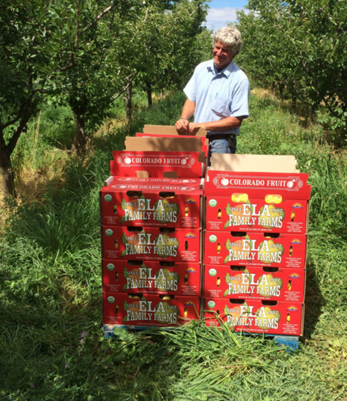 Steve Ela grows a diversity of fruit varieties on his Colorado farm and direct markets them, two strategies that improve the resilience of his operation and help him maintain profitability. (Photo by Laura Lengnick)