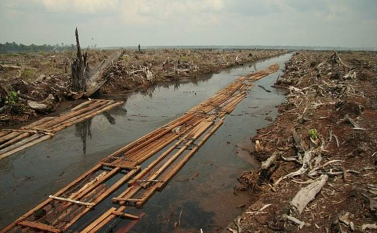 Asia Pulp & Paper commits to end Indonesian rainforest