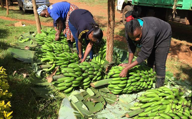 How food cold chains are improving lives and livelihoods in Asia and