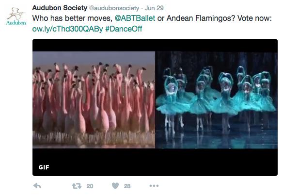 An Audubon tweet comparing flamingoes with ballet dancers