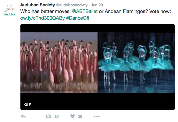 An Audubon tweet comparing flamingoes with ballet dancers