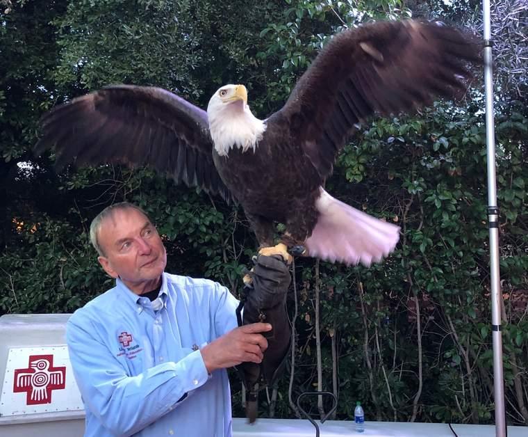 bald eagle, Liberty Wildlife, GreenBiz 20, Sustainability Solutions Celebration