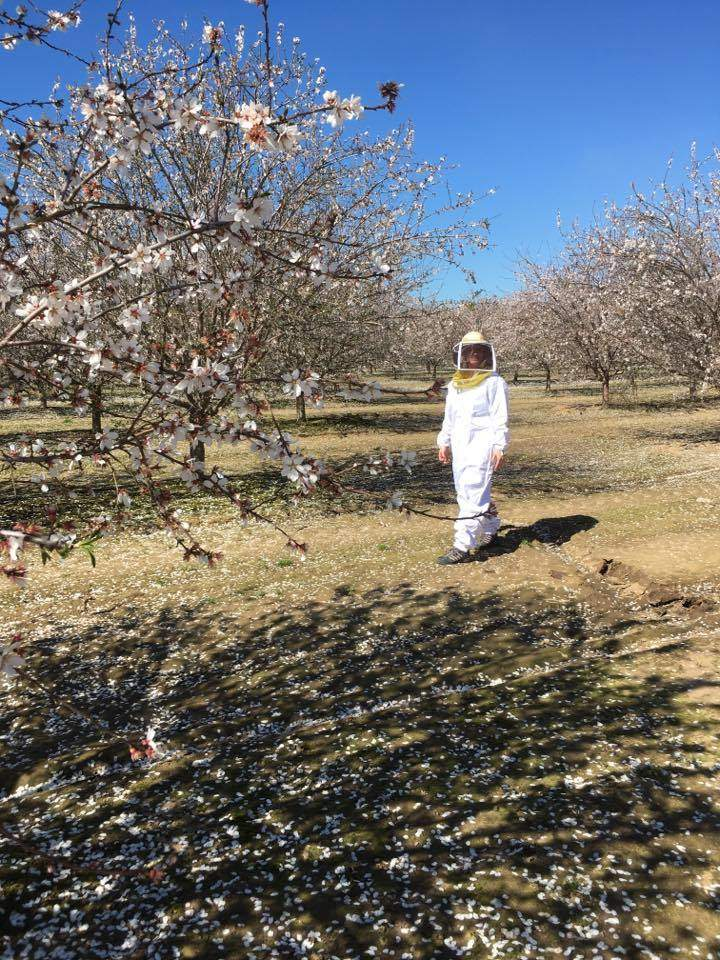 A woman strolls through the almond trees in a beekeeping suit.
