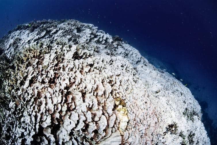Reef-scale coral bleaching
