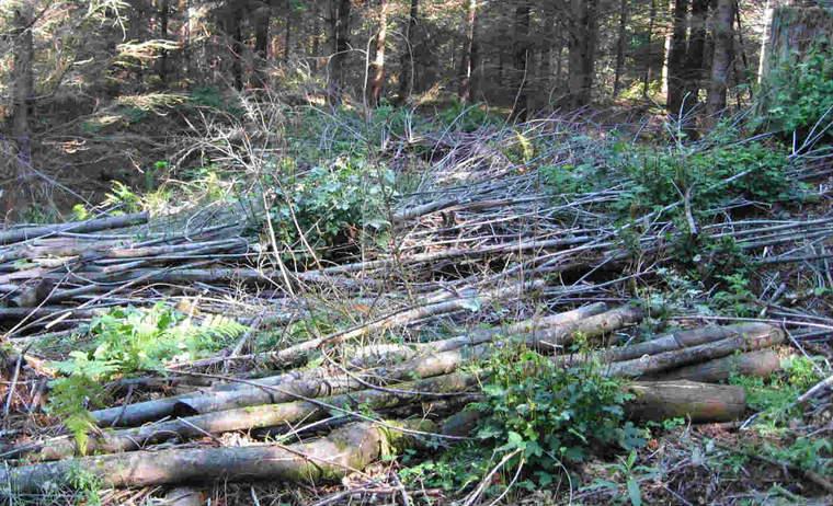 Brush on Oregon forest floor