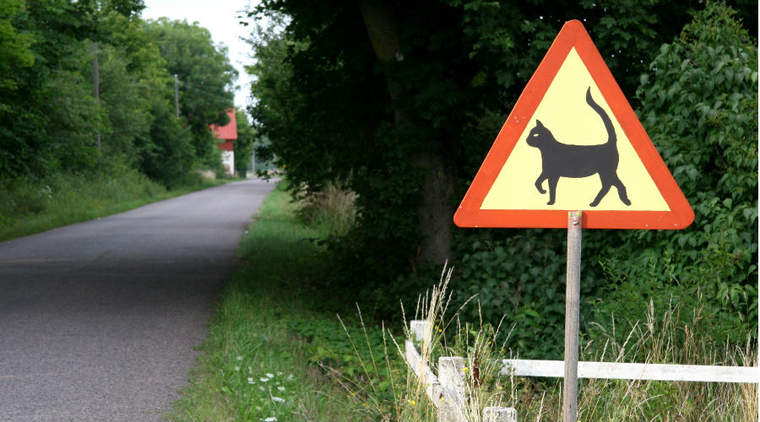 Cat crossing sign by road