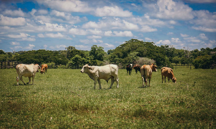 Mexico cattle land
