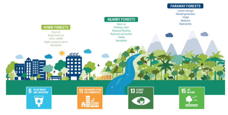 WRI's Cities4Forests graphic