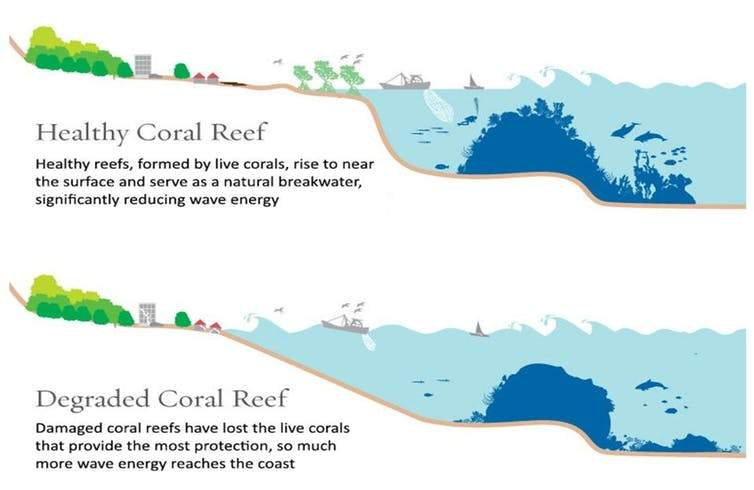 Healthy and degraded coral reef infographic