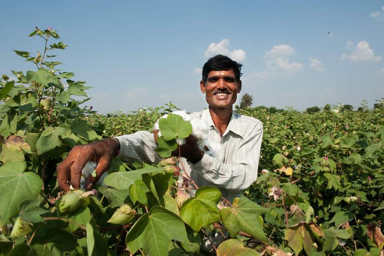 Lindex cotton farmer