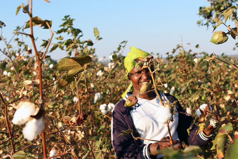 Tanzanian cotton farmer