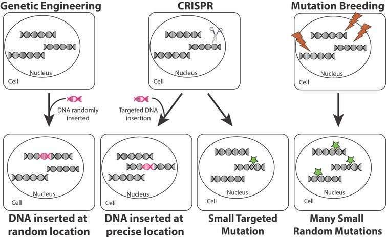 CRISPR vs. DNA