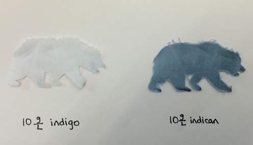 Cal bear demonstrates dyeing