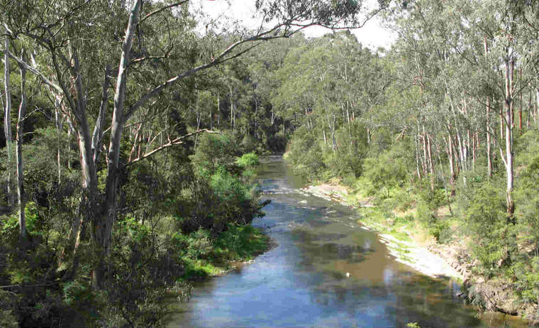 River-Flat Eucalypt Forest on Coastal Floodplains reference habitat