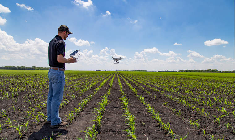 Agronomist using drone technology in corn field.