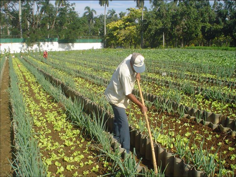 An organic farm in Cuba