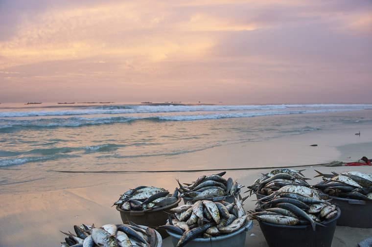 Fish in buckets on a beach in Senegal