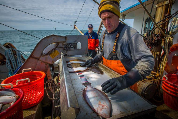 Fisherman measuring the size of his fluke