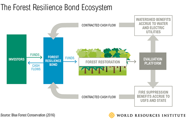 Forest Resilience Bond image