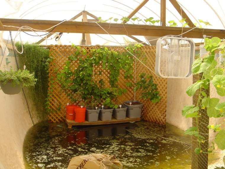 Inside the growing appeal of urban farming greenbiz for Raising tilapia in a pool