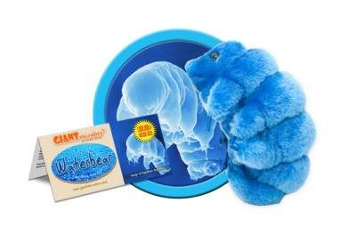 Tardigrade plush by GIANTMicrobes