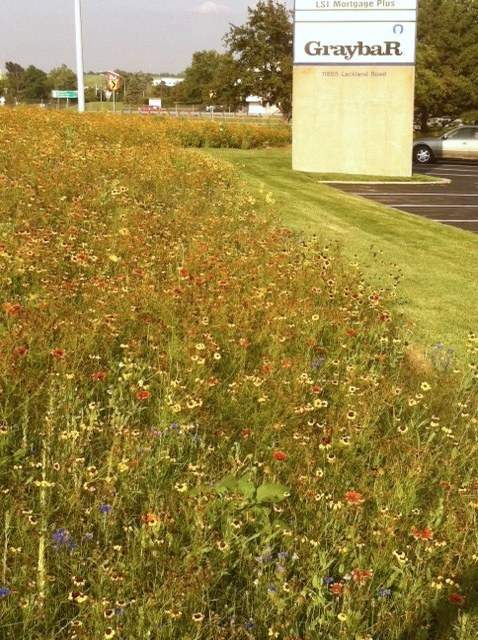 Graybar's site retains a neat mowed strip around biodiverse plantings that require little maintenance or water once they get established.
