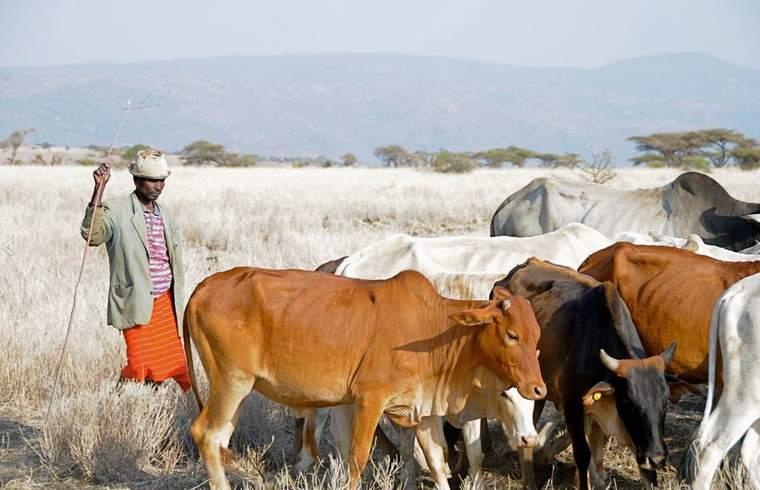 A herder within a Northern Rangelands Trust conservancy