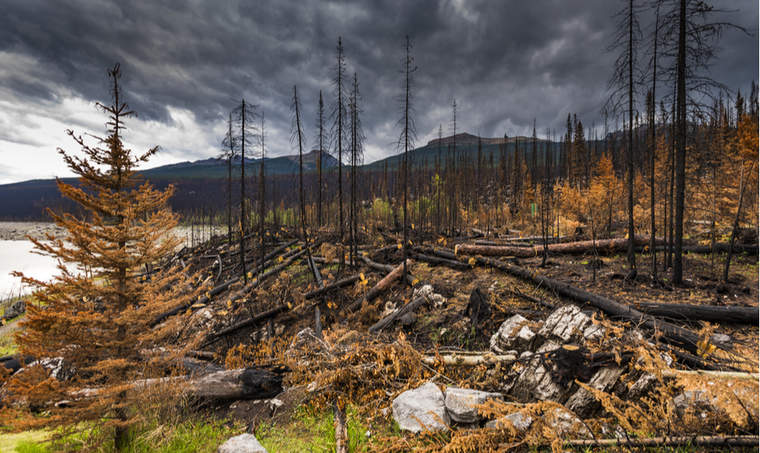 Aftermath of a forest fire in Jasper National Park in Alberta, Canada