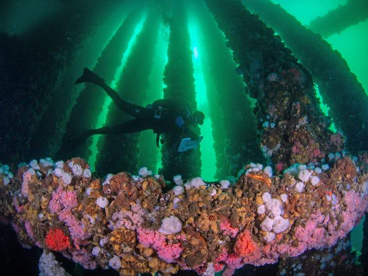 marine biologist surveys fishes