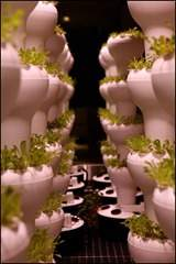 Microsoft Corp. MSFT Dining urban farming