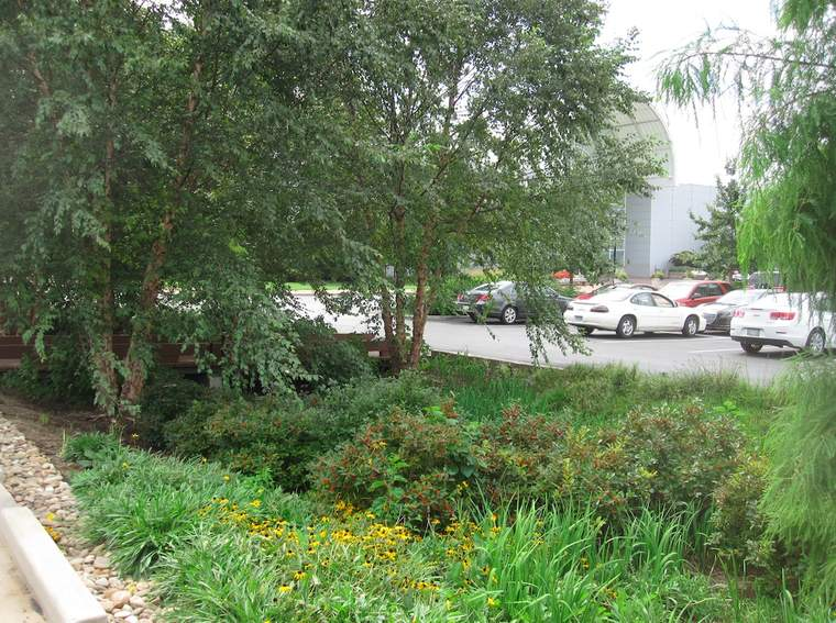 Missouri Botanical Garden converted two premium rows of free parking spaces into a shady bioswale for high-performance stormwater retention and public education.