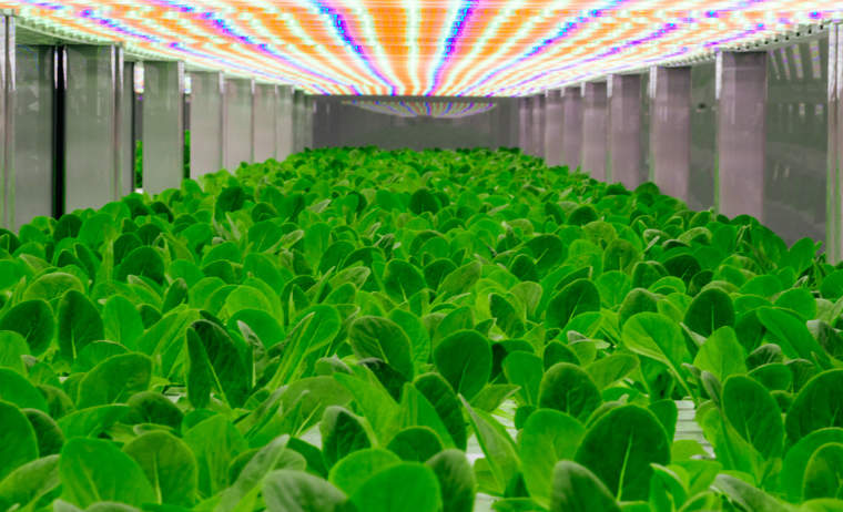 Oasis Biotech is growing leafy greens now, but its crop road map calls for producing strawberries, blackberries, beets and carrots in the future.