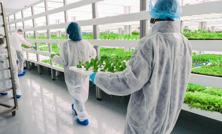 Oasis Biotech recently launched its first consumer brand, Evercress, after moving into its Las Vegas farm in May.