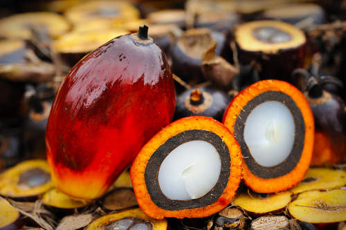 palm oil sustainability