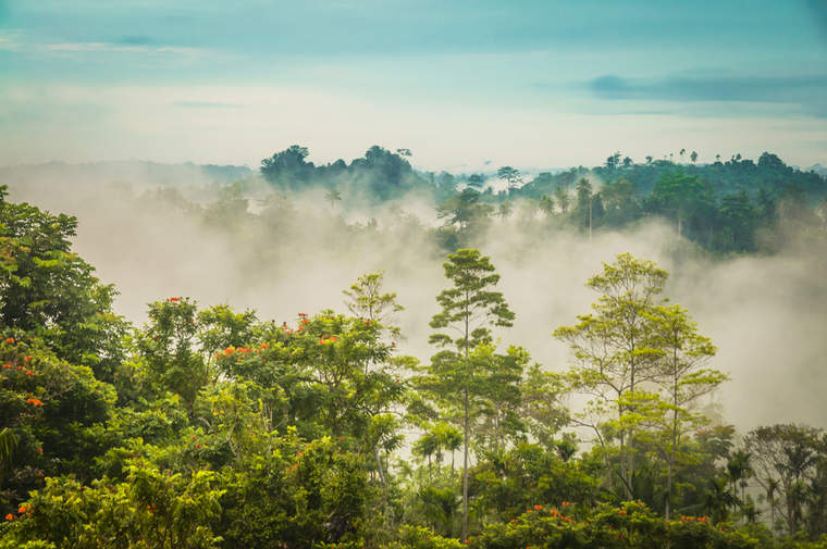 Morning fog above forest in Will-will in Nuku, Papua New Guinea
