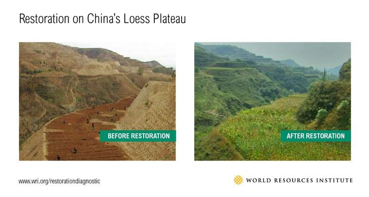 restoration-on-chinas-loess-plateau