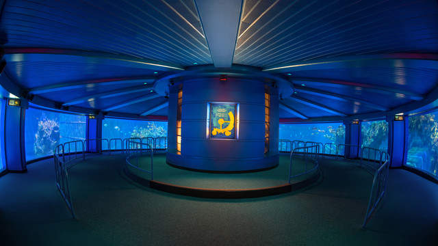 A 360-degree view of aquariums at Disney World